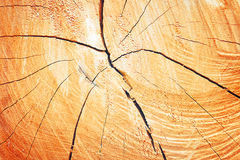 Texture of growth rings tree Stock Images