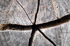 Texture of growth rings tree Royalty Free Stock Photo