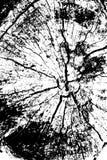 Texture grunge tramée affligée de vecteur - fond en bois d'éraflure de tronc Anneaux d'arbre - noirs et blancs Vecteur illustration de vecteur