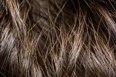 The texture of the hair close up. macrophotography stock photo