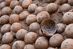 Coconut shell. Texture of half coconut shell royalty free stock images