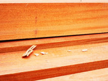 Texture of hardwood Stock Images