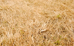 Texture of hay Royalty Free Stock Images