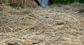 Texture of hay Stock Photography