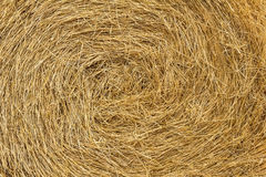 The texture of hay Royalty Free Stock Photo