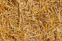 Texture of hay Stock Image