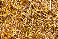 Texture of hay Royalty Free Stock Photography