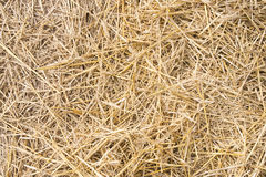 Texture hay closeup in color. Stock Images