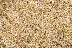 Texture hay closeup in color. Stock Photography