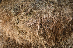 Texture hay closeup in color. Fodder for livestock Royalty Free Stock Photography