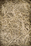 Texture hay closeup in color. Royalty Free Stock Photography