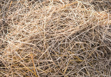 Texture hay closeup in color Stock Photography