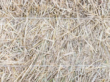 The texture of haystack with white rope. Royalty Free Stock Photos
