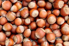 Texture hazelnut hazelnuts in the shell fresh crop. Hazelnut, hazelnuts, background, food, healthy, brown, organic, nutrition, heap, shell, nut, texture, closeup royalty free stock photos