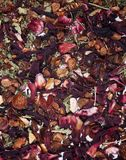 Texture of herbal tea Royalty Free Stock Images
