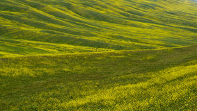 Texture hilly terrain with  flowers Stock Photo