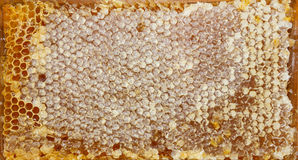 Texture of honey Royalty Free Stock Image