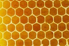 Texture of honeycomb. Close-up. stock image