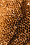 Texture of honeycomb. Natural background. Stock Photos