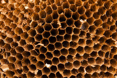 Texture of honeycomb. Natural background. Royalty Free Stock Photos