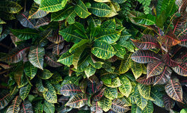 texture horizontal des panneaux de pin inextricable Photos stock