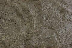 Texture humide de ciment pour le fond Plancher en béton humide Images libres de droits