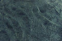 Texture humide de ciment pour le fond Plancher en béton humide Photographie stock libre de droits