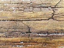 Texture humide de surface de tronc avec des fissures pour le fond photos libres de droits