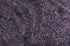 Texture humide pourpre de ciment pour le fond Plancher en béton humide Image stock