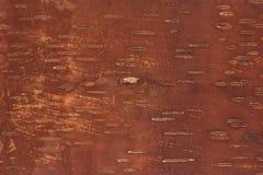 Inner side of birch bark Stock Photos
