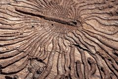 The texture of the inner surface of pine bark damaged by insect pests.  royalty free stock photography