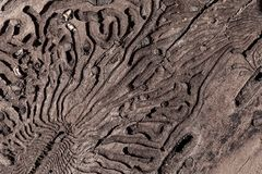 The texture of the inner surface of pine bark damaged by insect pests.  stock photo