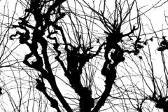 Texture Isolant sur le fond blanc Silhouette blanche noire dessins Branchements d'arbre illustration libre de droits