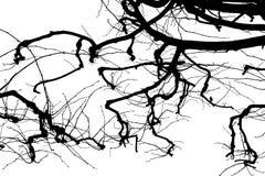Texture Isolant sur le fond blanc Silhouette blanche noire dessins Branchements d'arbre illustration de vecteur