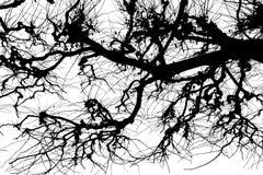 Texture Isolant sur le fond blanc Silhouette blanche noire dessins Branchements d'arbre images libres de droits