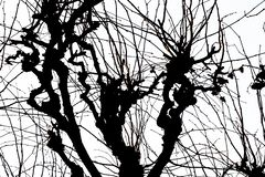 Texture. Isolant on white background. black white silhouette. graphics. tree branches vector illustration
