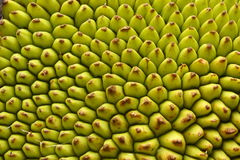 Texture of a Jack fruit`s outer skin. Abstract background-Texture of a Jack fruit`s outer skin Stock Image