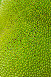 Texture of jackfruit Stock Images