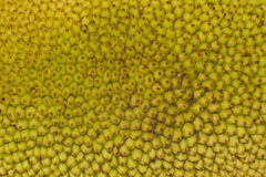 Texture of Jackfruit Stock Image