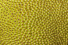 Texture of jackfruit Stock Photos