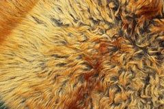 Texture jaune et brune de fourrure Photos libres de droits