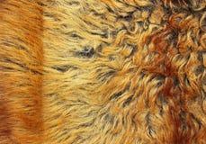 Texture jaune et brune de fourrure Images libres de droits