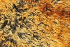 Texture jaune et brune de fourrure Photographie stock libre de droits