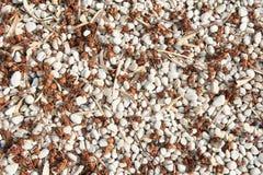 Texture lâche de gravier avec les graines et les feuilles naturelles Images stock