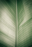 The texture of a large blue leaf Stock Photography