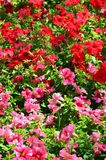 The texture of a large number of different colorful flowers planted in a flower be. D stock photography