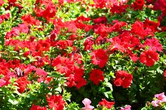 The texture of a large number of different colorful flowers planted in a flower be. D stock photos