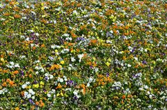 The texture of a large number of different colorful flowers planted in a flower be. D stock photo