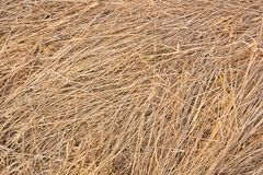 The texture of last year`s old grass-straw stock photography