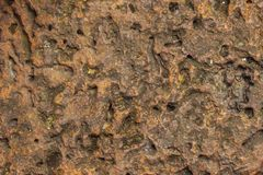 Texture Laterite stone Stock Images